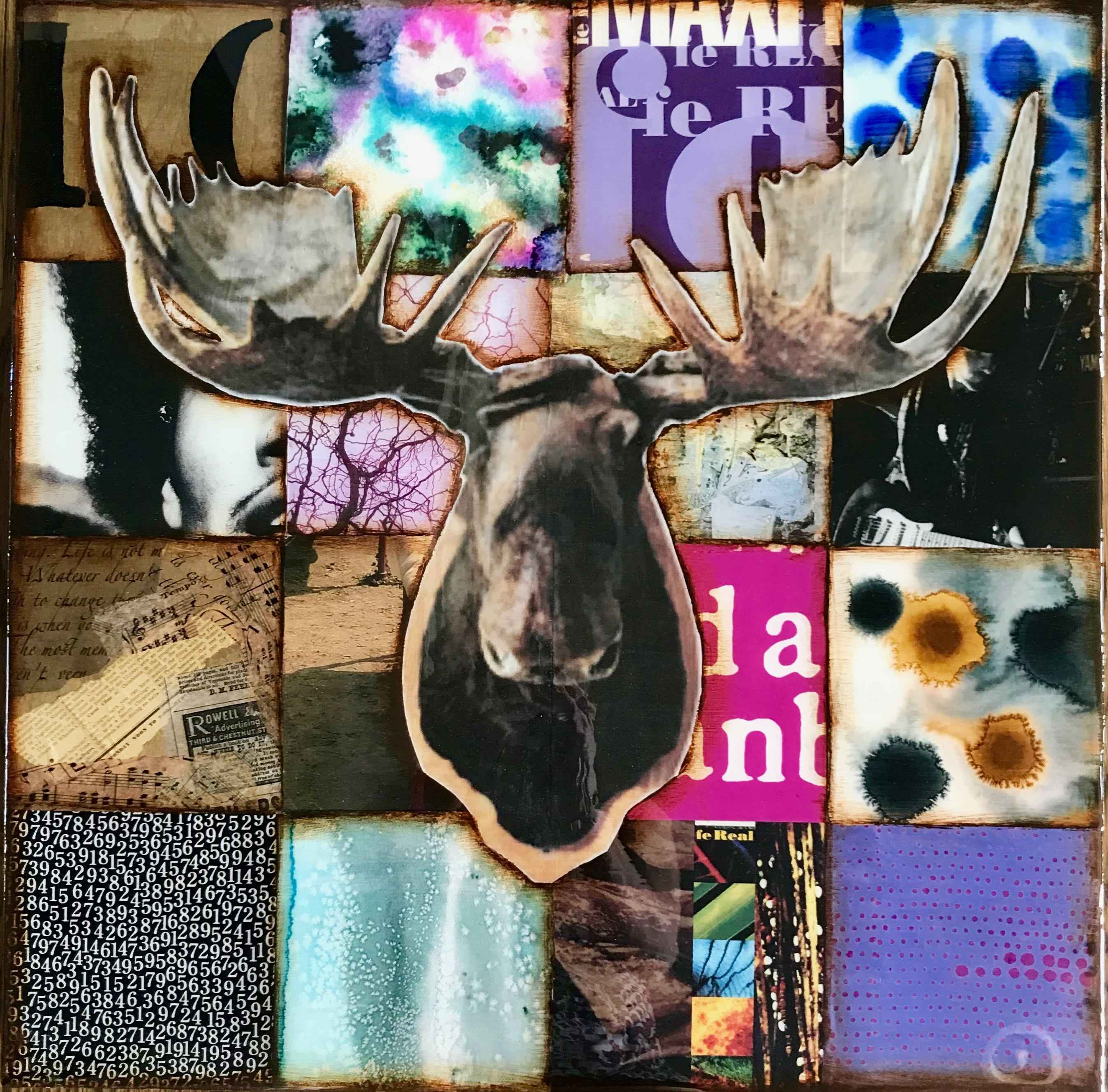 Jimi the Moose