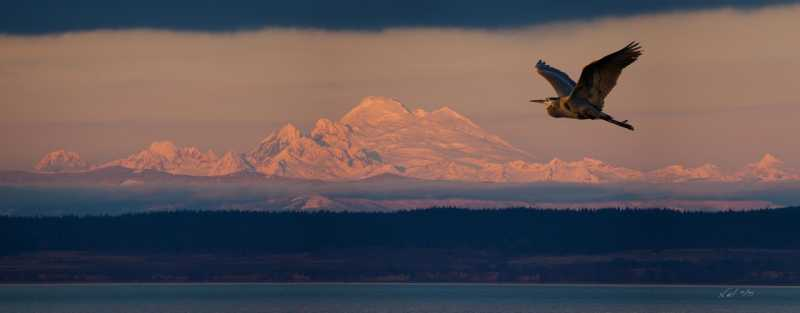 Heron and Mt. Baker S...