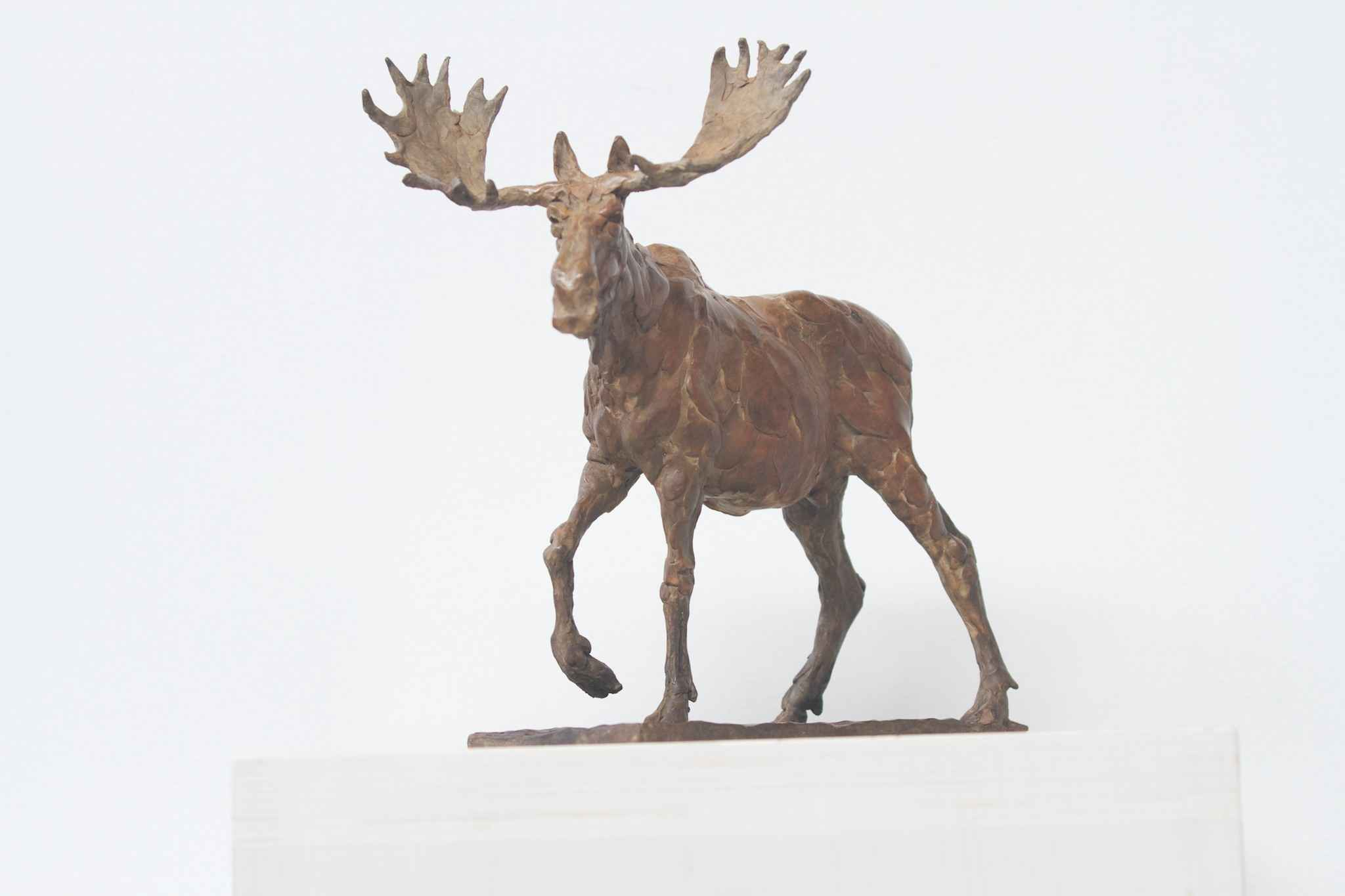 Moose by  James Stewart - Masterpiece Online