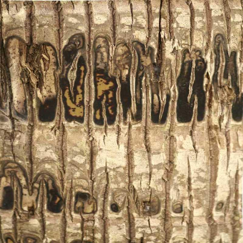 Untitled Tree Bark by  Karen Daspit - Masterpiece Online