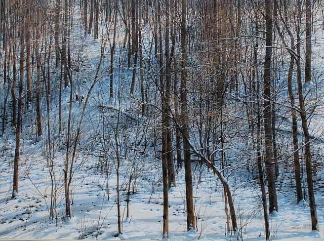 Leaning Beech - Janua... by  Michael Wheeler - Masterpiece Online