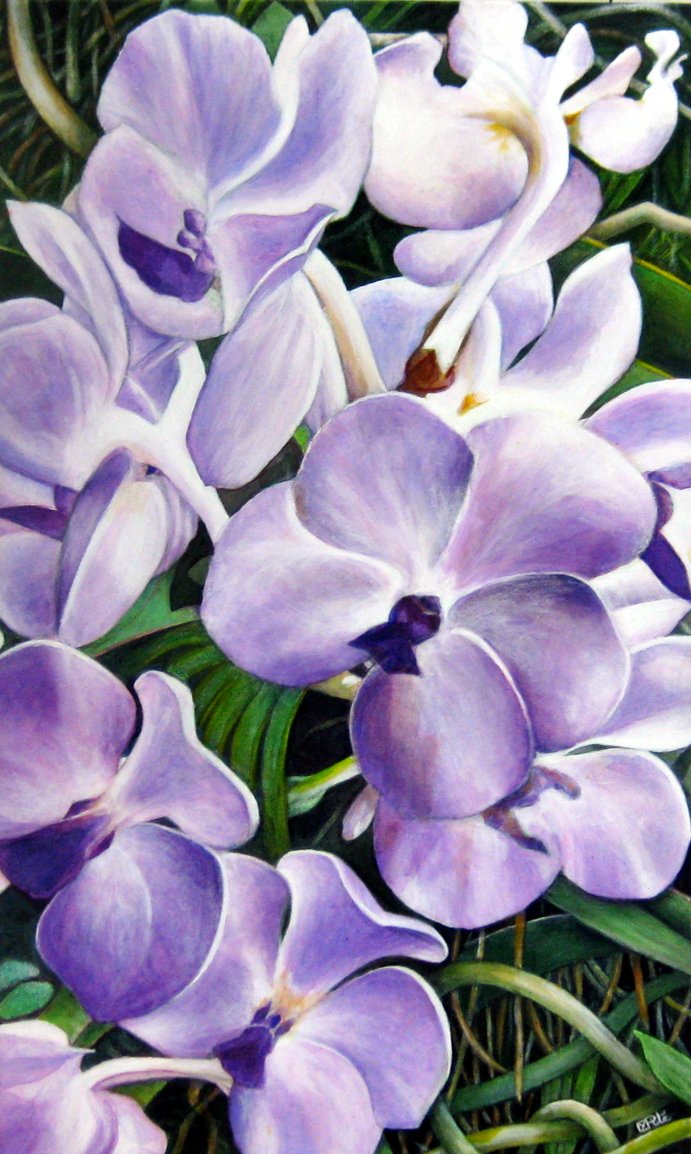 Orchids by  Martina Pile - Masterpiece Online