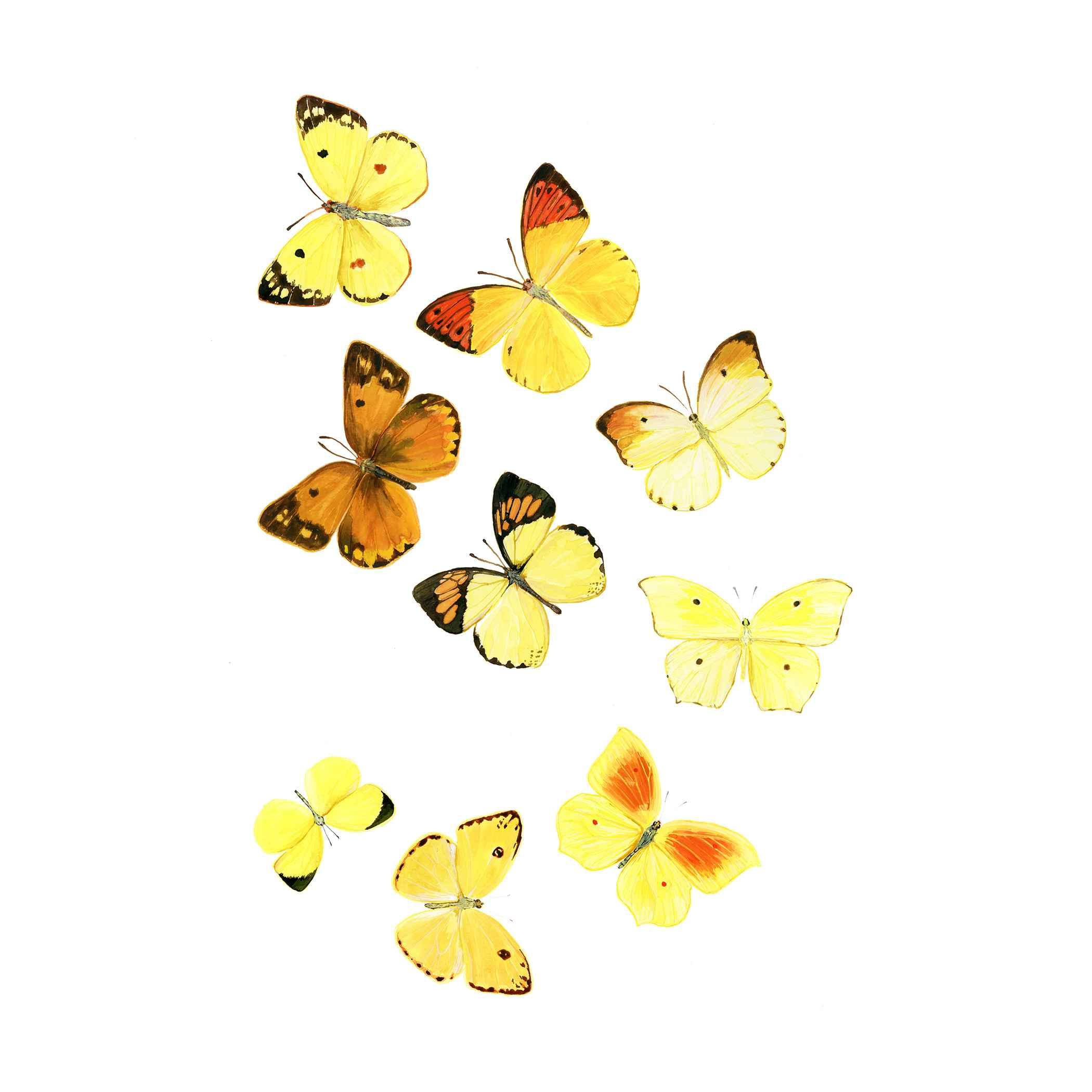 Fibonacci Butterflies by  Paul Atwell - Masterpiece Online