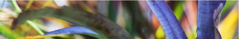Bromeliad Leaf 2 Ed: ... by  Allen Maertz - Masterpiece Online