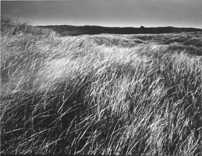 Up-Island Grasses Aug... by  Alfred Eisenstaedt - Masterpiece Online