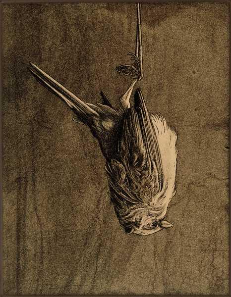 Memento Mori by  David Smith-Harrison - Masterpiece Online