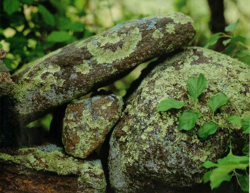 Stone Wall, Beetlebun... by  Alison Shaw - Masterpiece Online