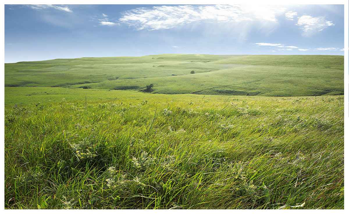 Prairie Rising by  Betsy Forcade - Masterpiece Online