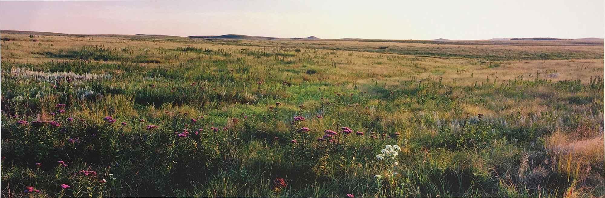 Field, Flowers - Sali... by  George Jerkovich - Masterpiece Online