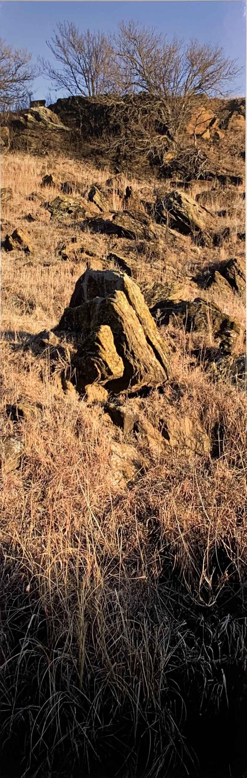 Grasses, Stones, Tree... by  George Jerkovich - Masterpiece Online