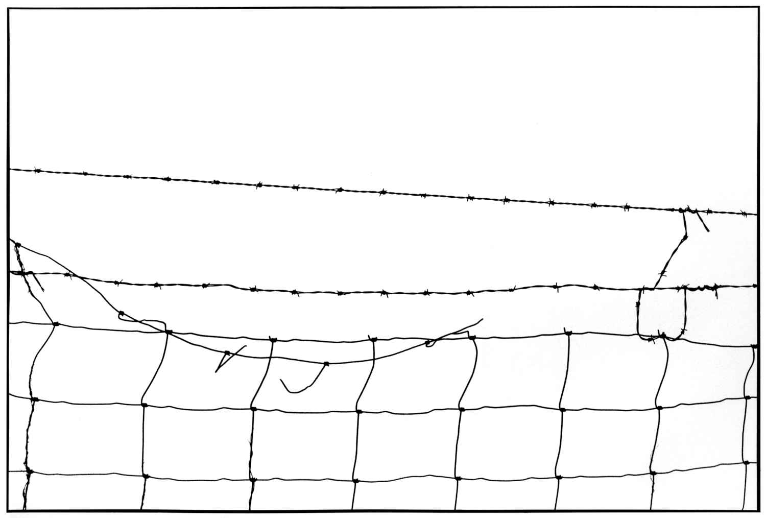 Wire Fence 1994 B1 by  Alison Shaw - Masterpiece Online