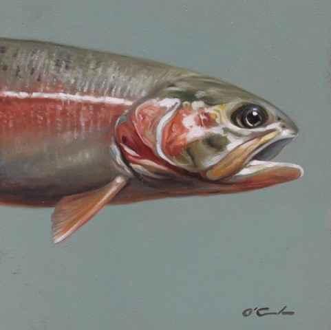 Rainbow Trout #1  by  Jennifer O'Cualain