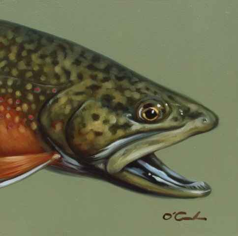 Brook Trout #1  by  Jennifer O'Cualain