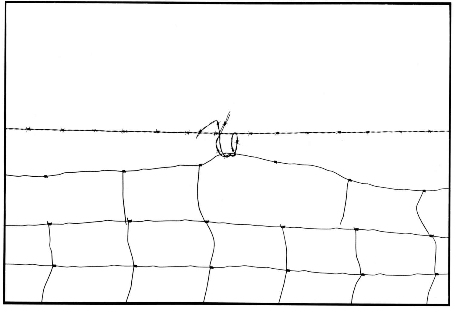 Wire Fence II 1994 B1 by  Alison Shaw - Masterpiece Online