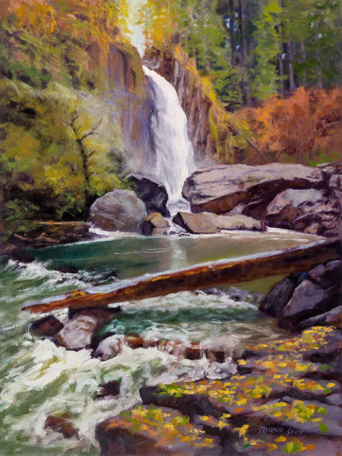 Drift Creek Falls  by  Richard Smith