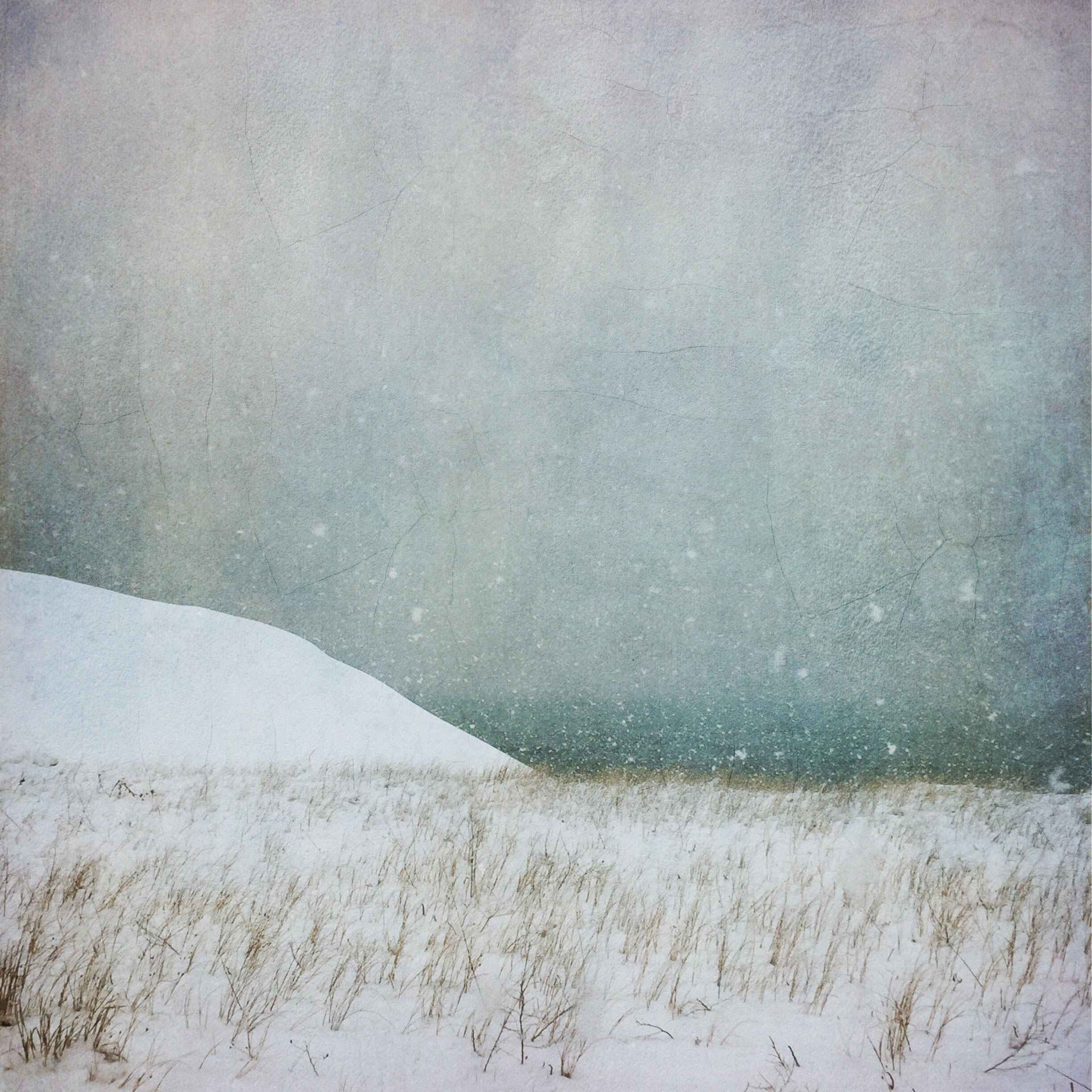 State Beach Dune by  Barbara duBois - Masterpiece Online