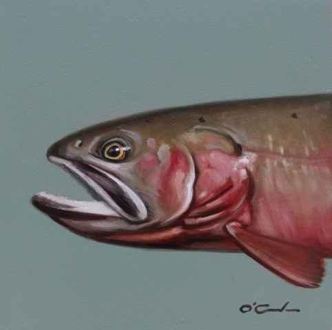 Cutthroat Trout #3