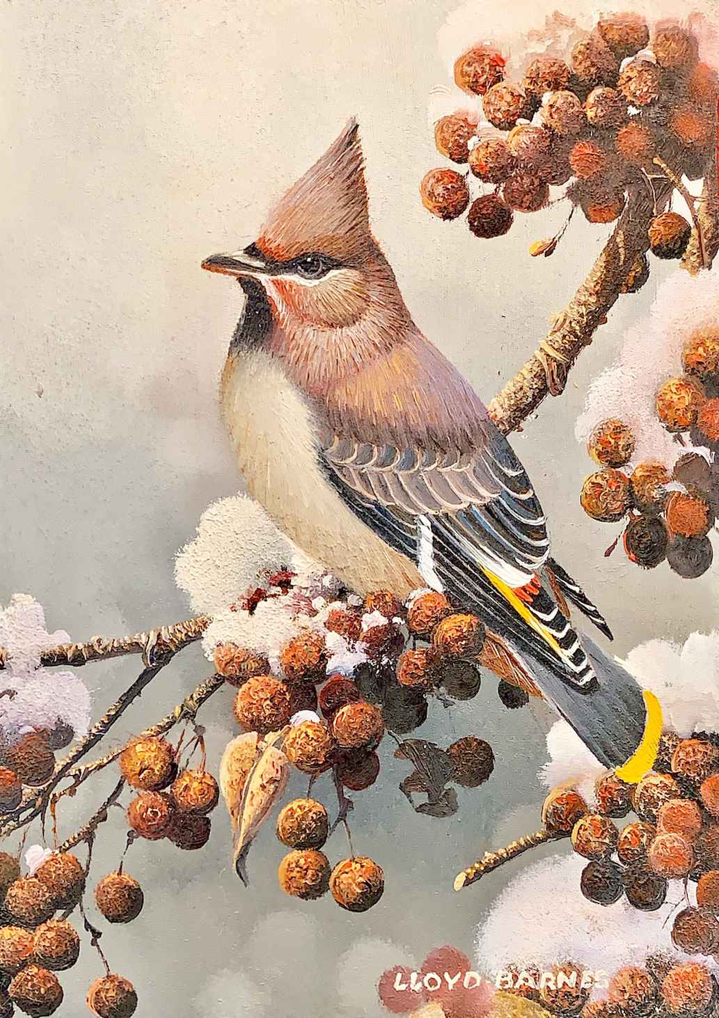 Bohemian Waxwing by  Bob and Lloyd Barnes - Masterpiece Online