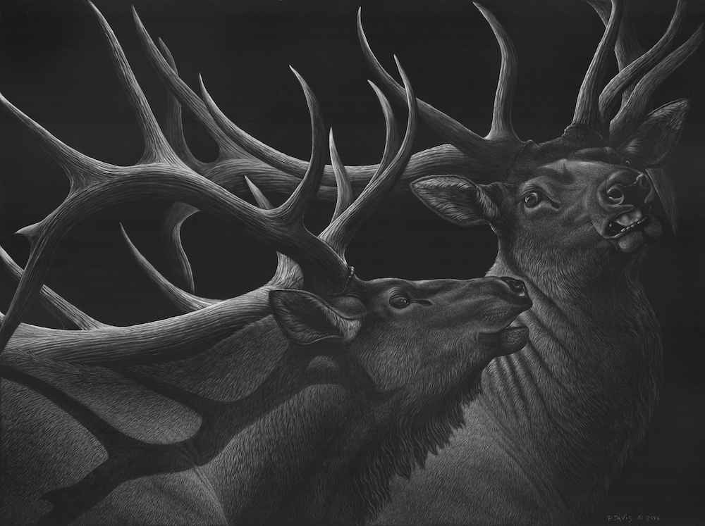 Scratchboard 101 with... by  Patsy Davis - Masterpiece Online
