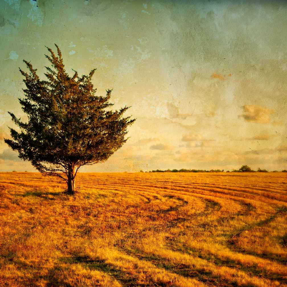 Autumn Light 1 by  Michael Stimola - Masterpiece Online
