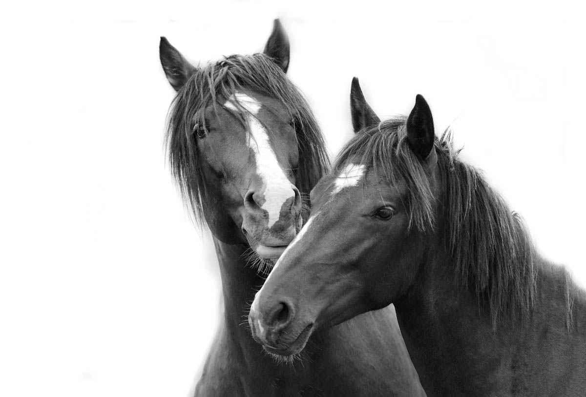 Friends by  Tony Stromberg - Masterpiece Online