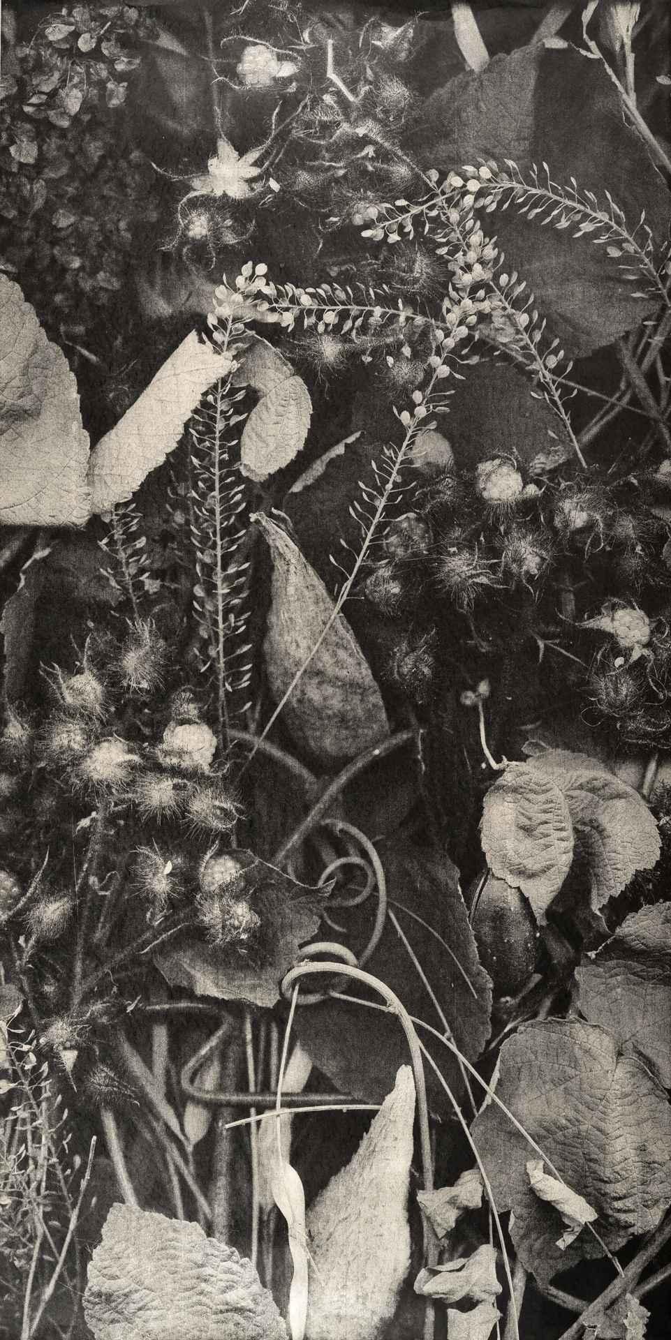 Growth VIII by  Richard Hricko - Masterpiece Online