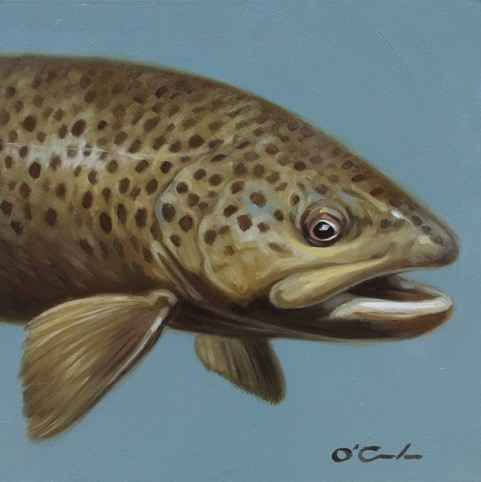 Brown Trout #2