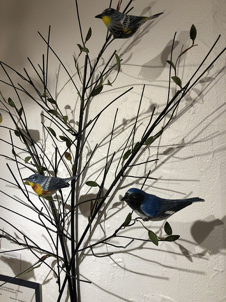 Blue Colored Warblers