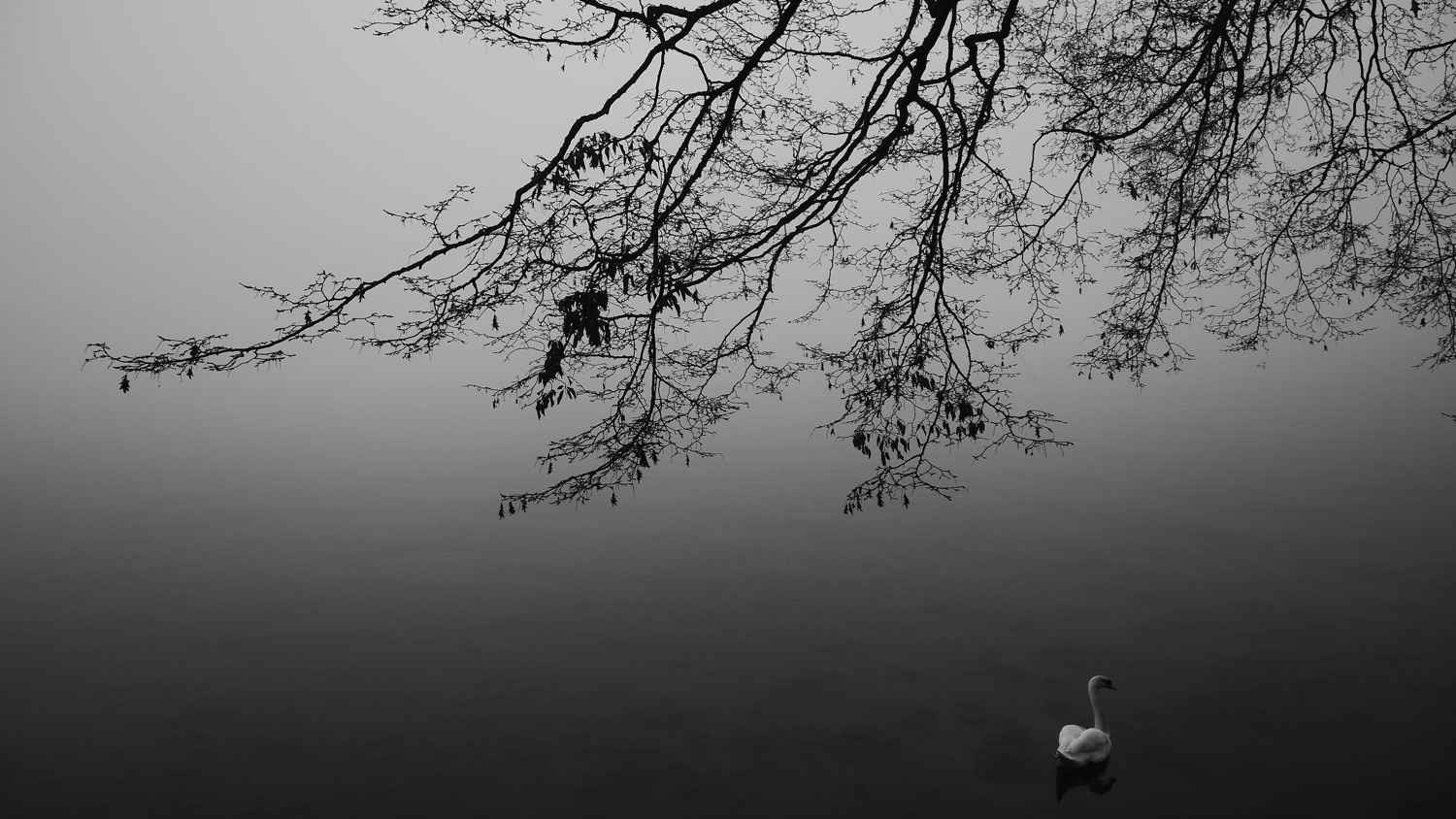 Fragments-3: Cygne so... by Mme Nathalie BERTHOD - Masterpiece Online
