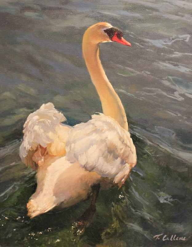 Mute Swan  by  Tammy Callens