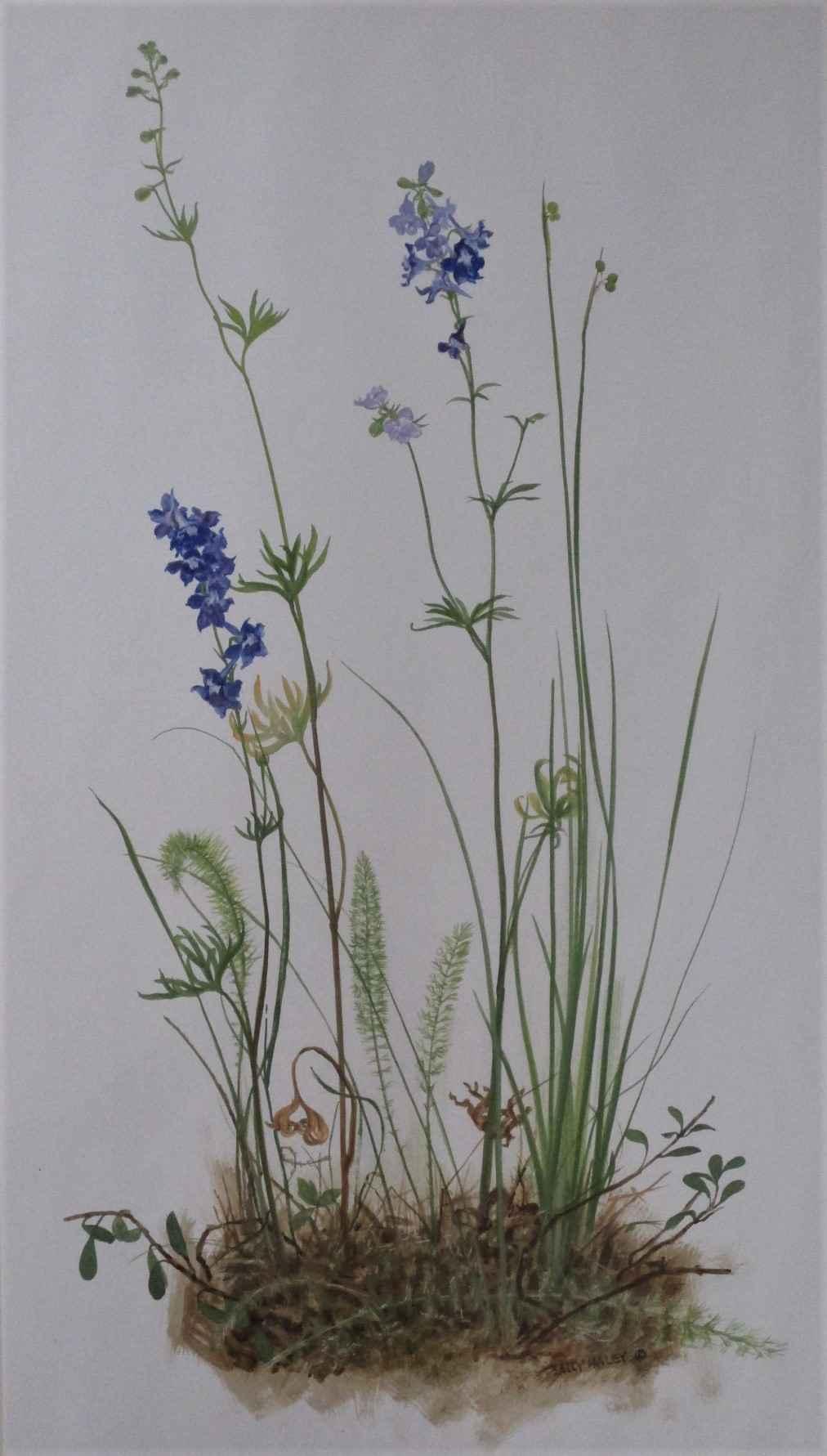 Unknown (purple flowe... by  Sally Haley - Masterpiece Online