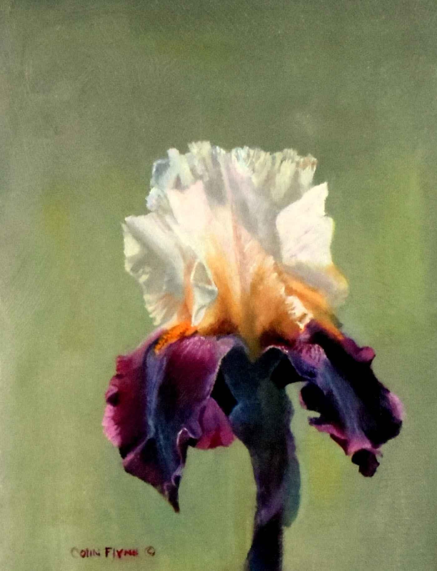 Iris 1 by  Colin Flynn - Masterpiece Online