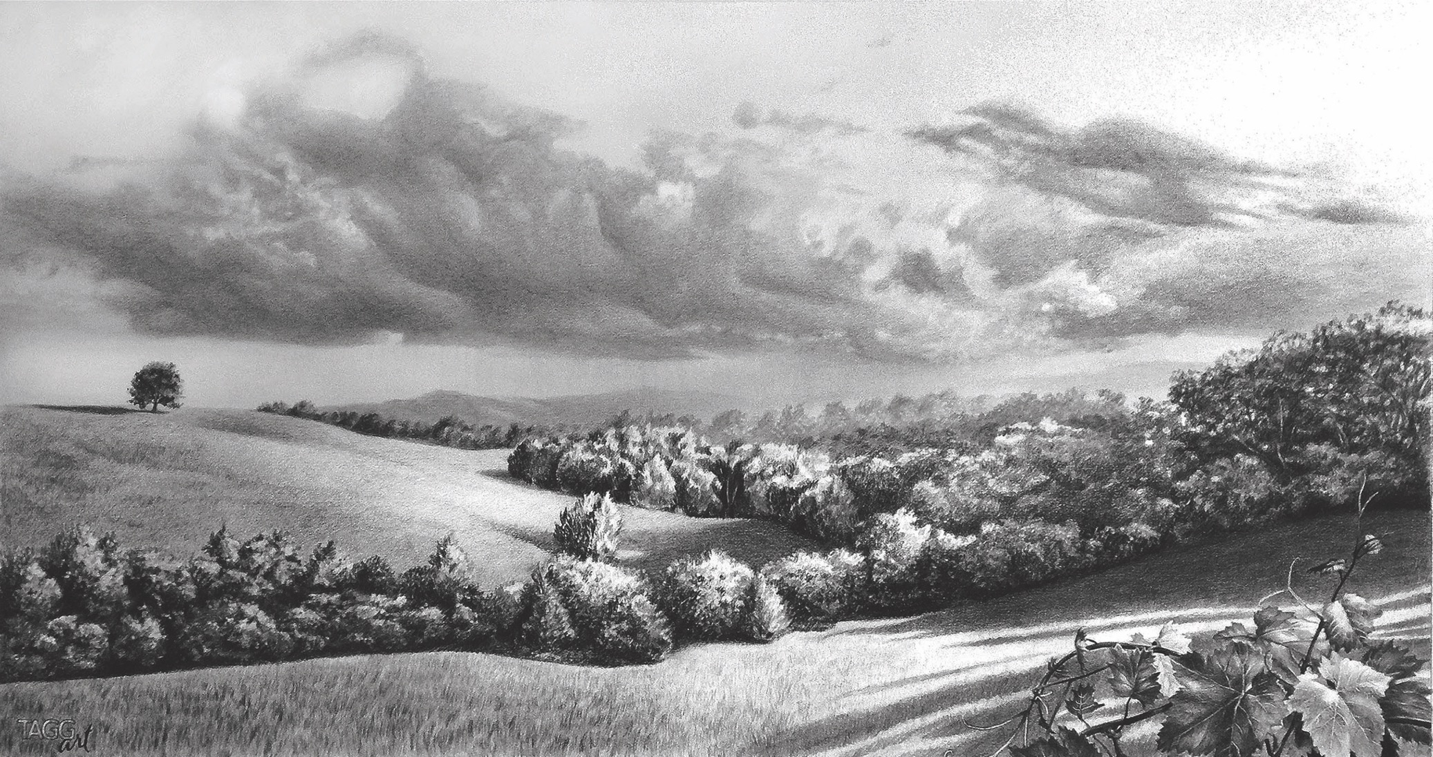 View from the Vine by  Kim Taggart - Masterpiece Online