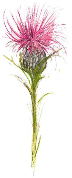 DP-Red Thistle by  P. Buckley Moss  - Masterpiece Online
