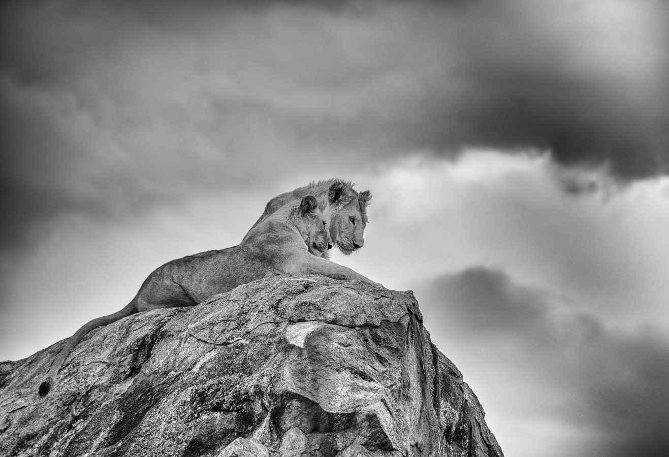 Little Pride Rock by  Xtina Parks - Masterpiece Online