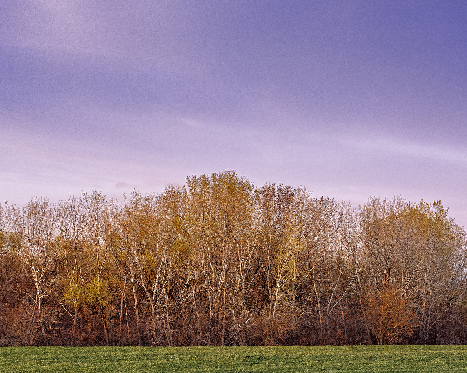 Field and Trees by  George Jerkovich - Masterpiece Online