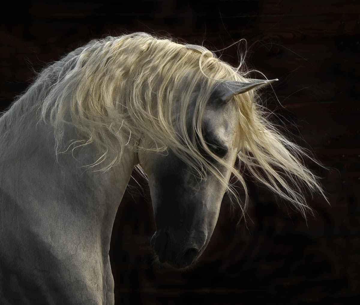 Unicorn by  Tony Stromberg - Masterpiece Online