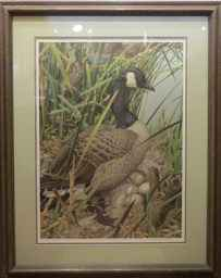 Canadian Honker 302/7... by  Axel Amuchastegui - Masterpiece Online