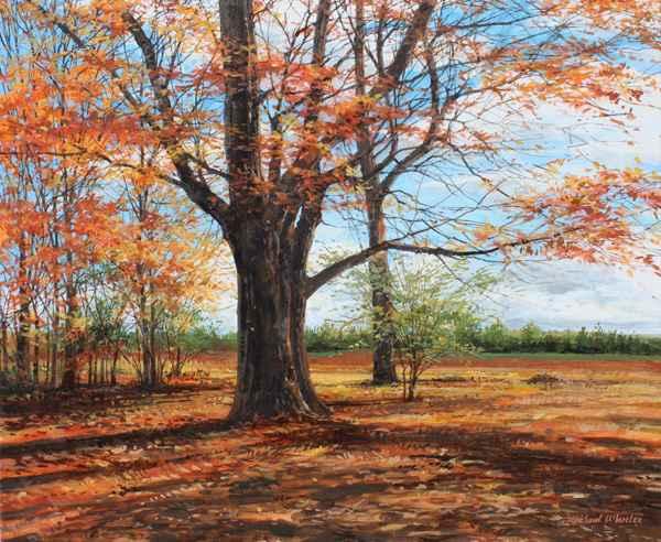 Massive Old Oak - Oct...