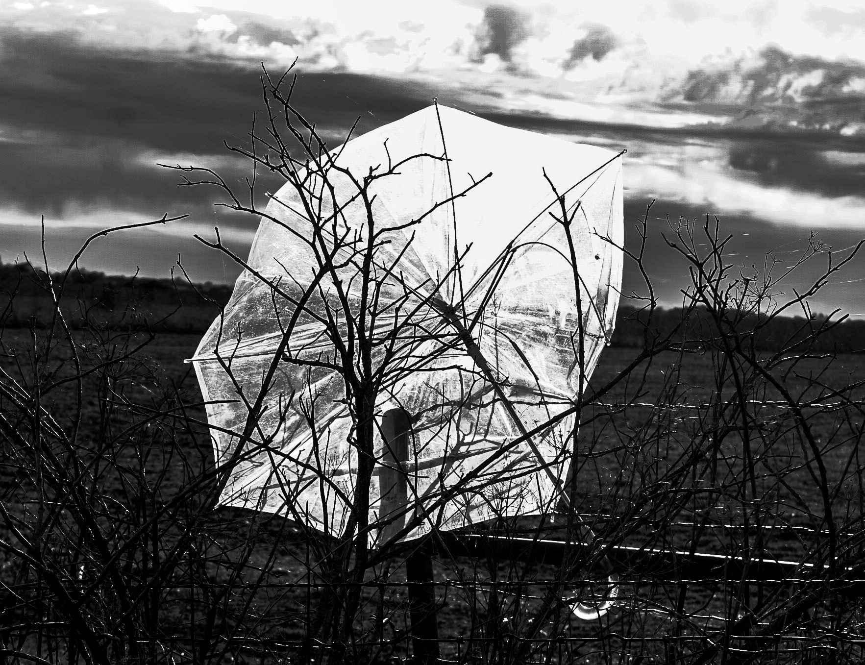 Windy Day by  Jeff Foster - Masterpiece Online