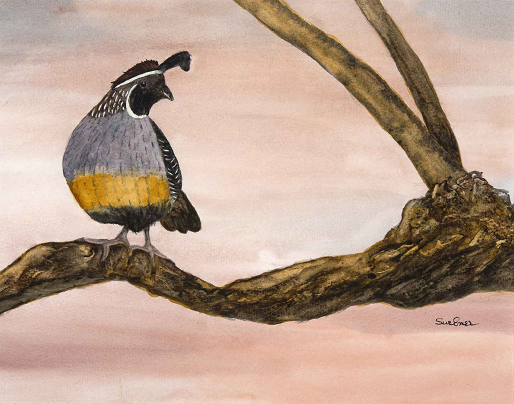 Gambel's Quail by  Sue Emer - Masterpiece Online