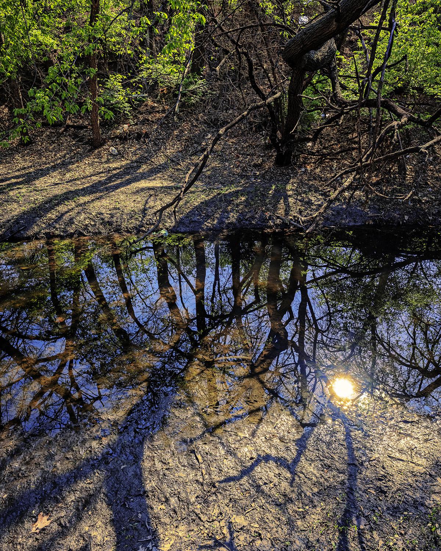 Forest Floor 2 by  George Jerkovich - Masterpiece Online