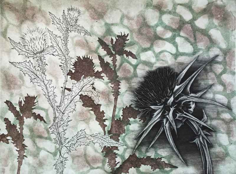 Thistle by  Julie Niskanen - Masterpiece Online