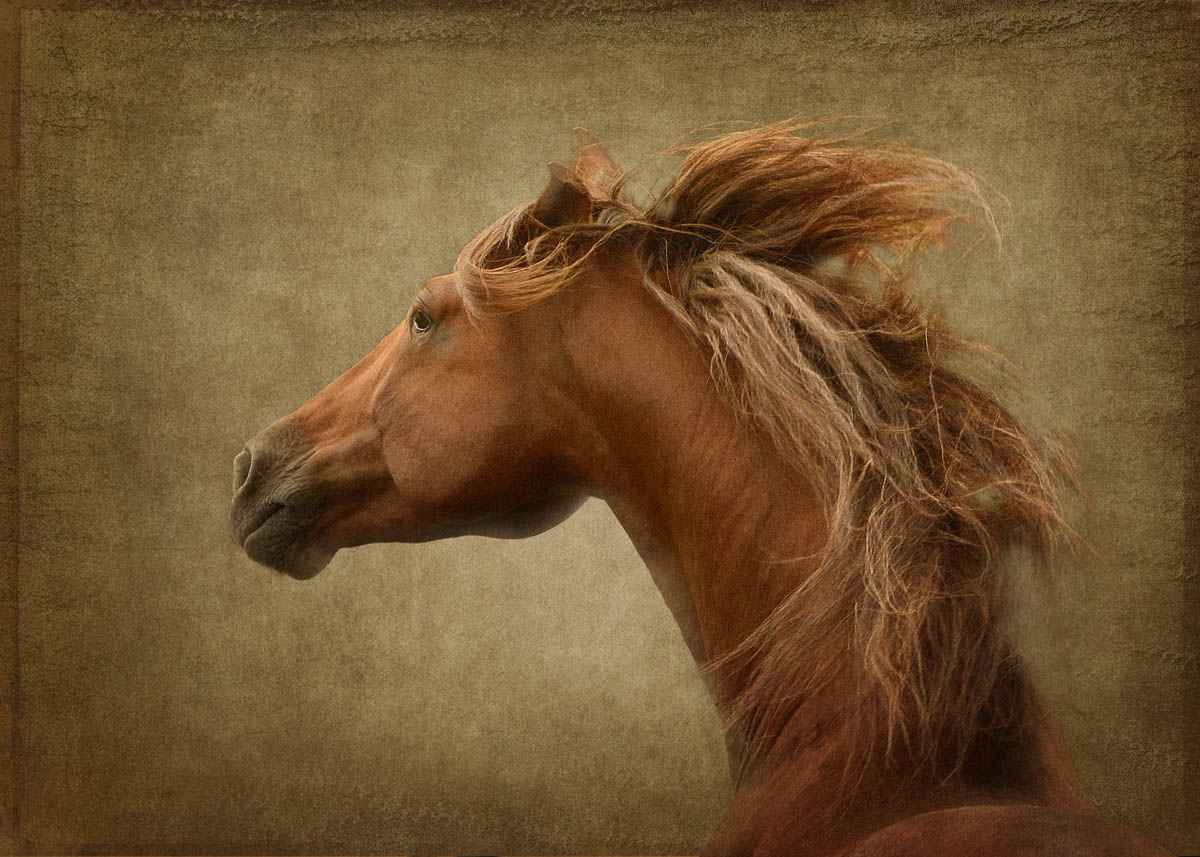 Necessario - Framed by  Tony Stromberg - Masterpiece Online
