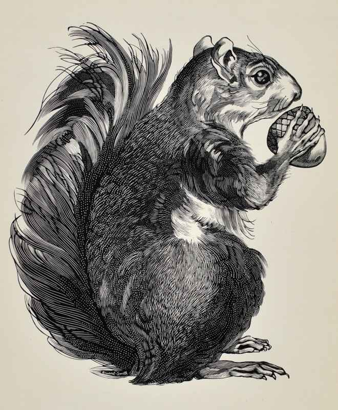 Squirrel by  Bernard Brussel-Smith (1914-1989) - Masterpiece Online