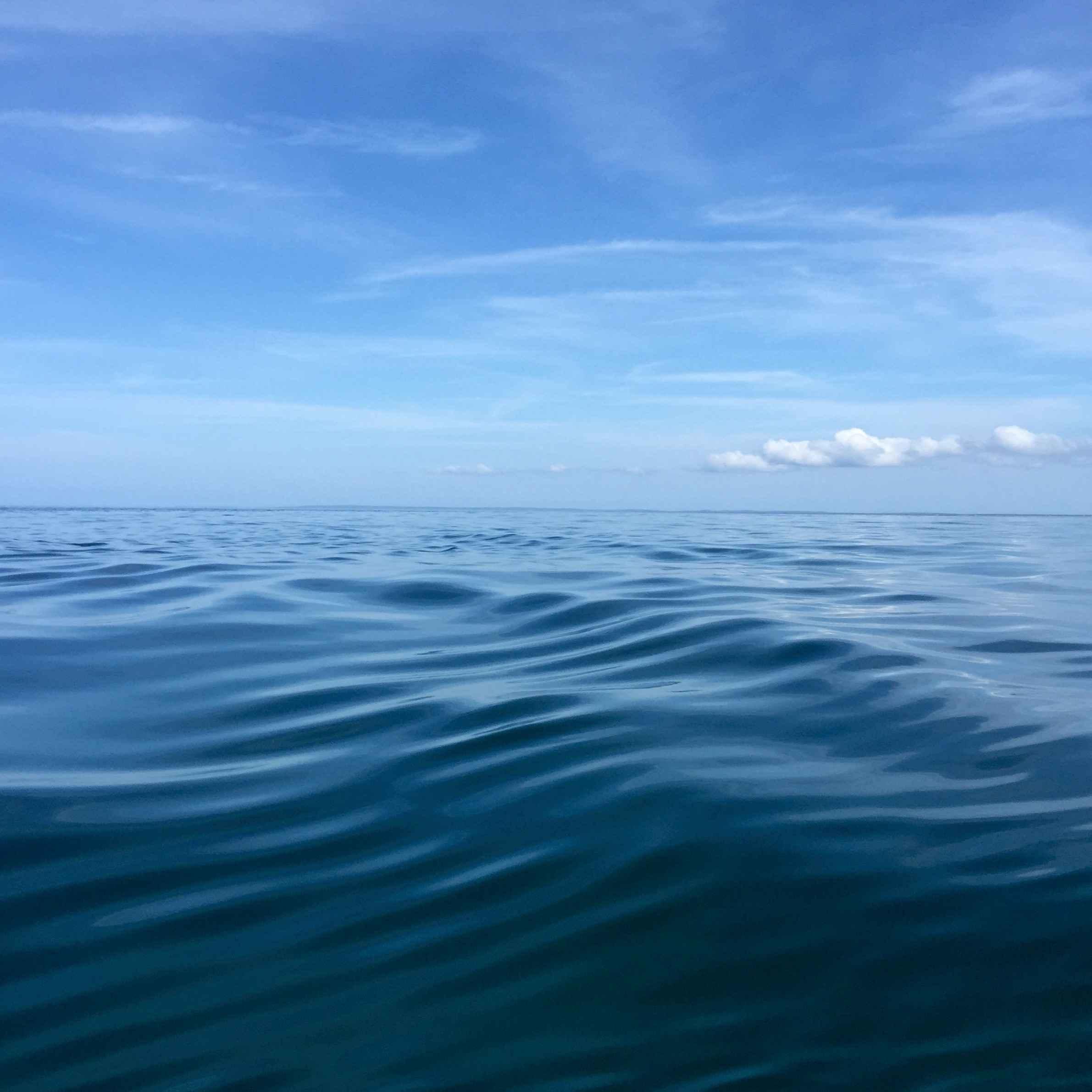 Sea Meadow II by  Melinda Fager - Masterpiece Online