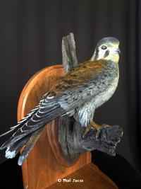 Kestral  # 4/20 by  Burl Jones - Masterpiece Online