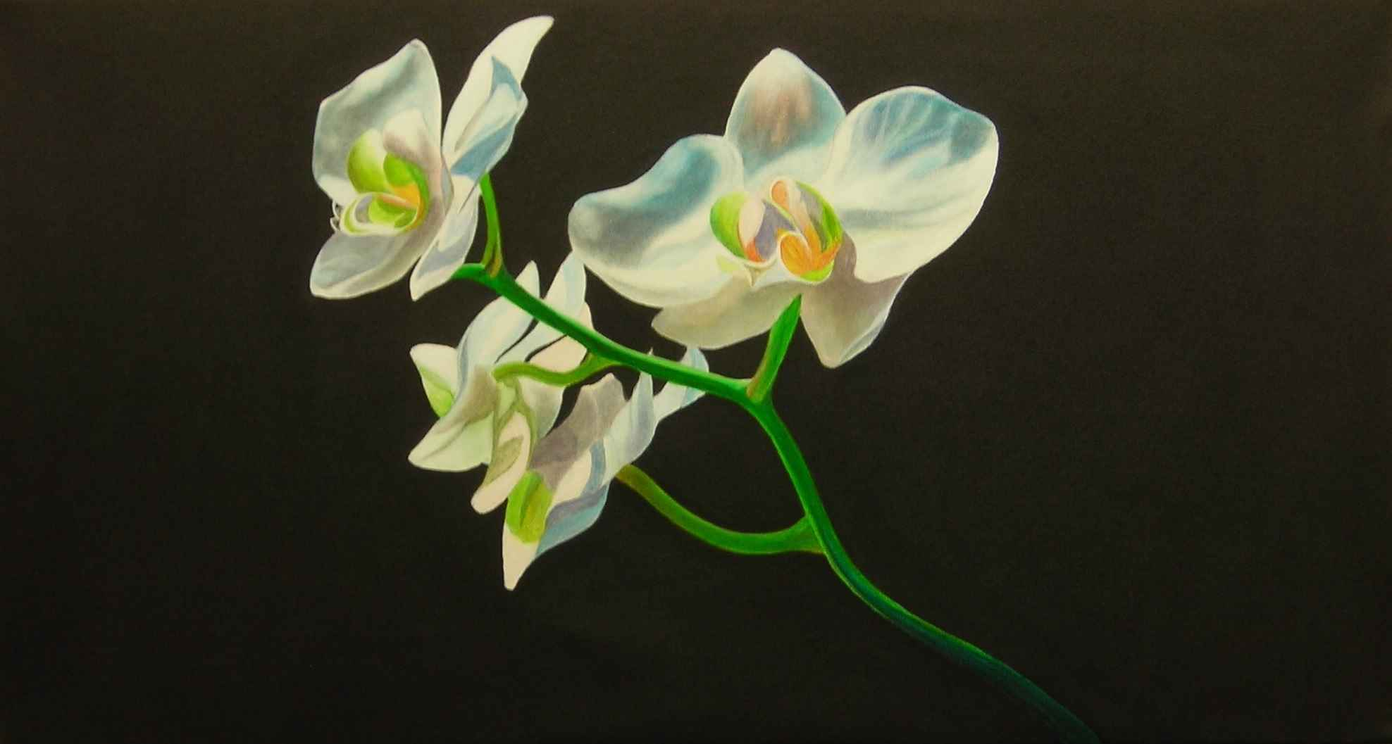 Orchid 7 by  Doug Sweet - Masterpiece Online