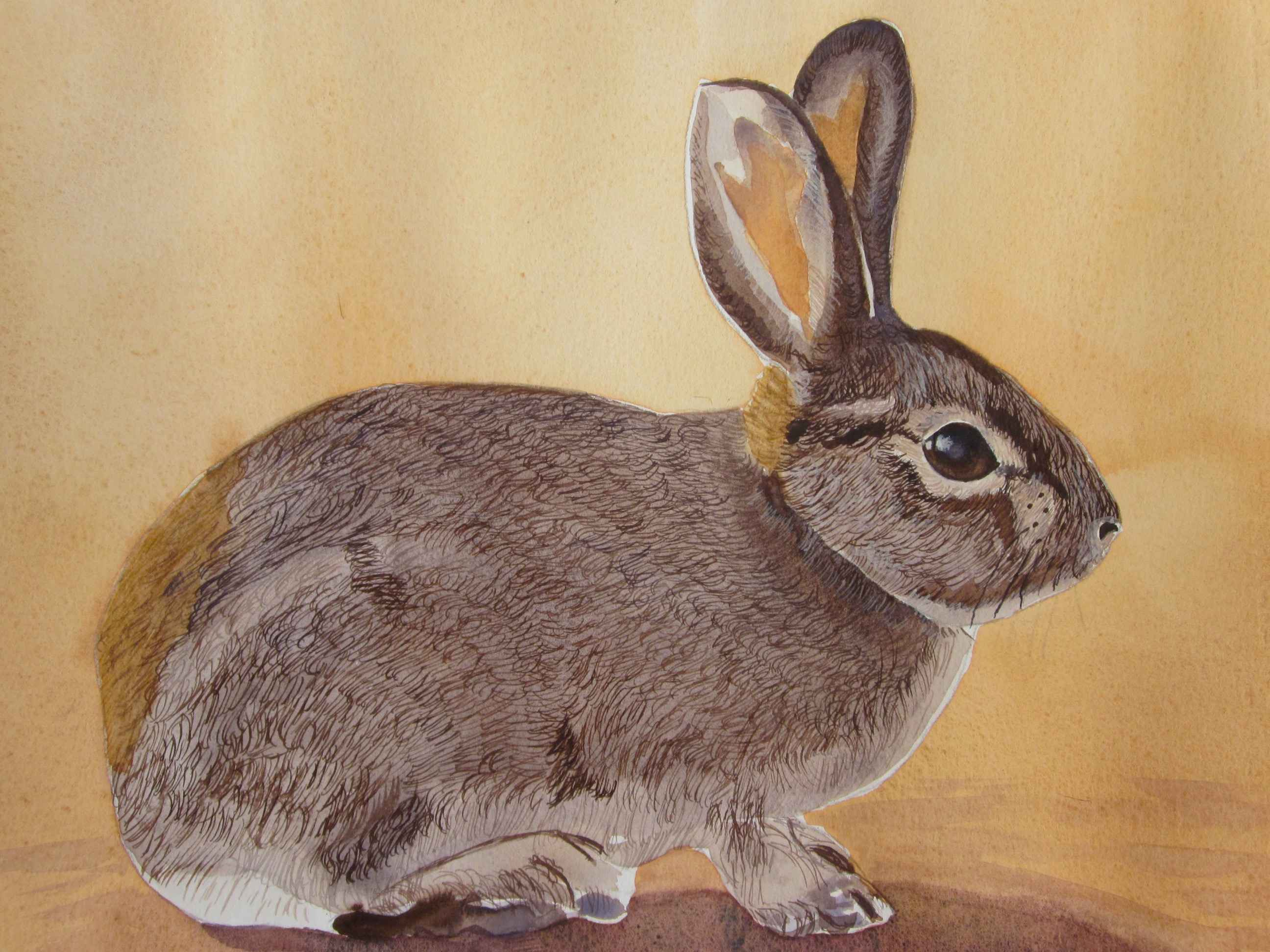 Desert Cottontail by  Carolyn Streed - Masterpiece Online