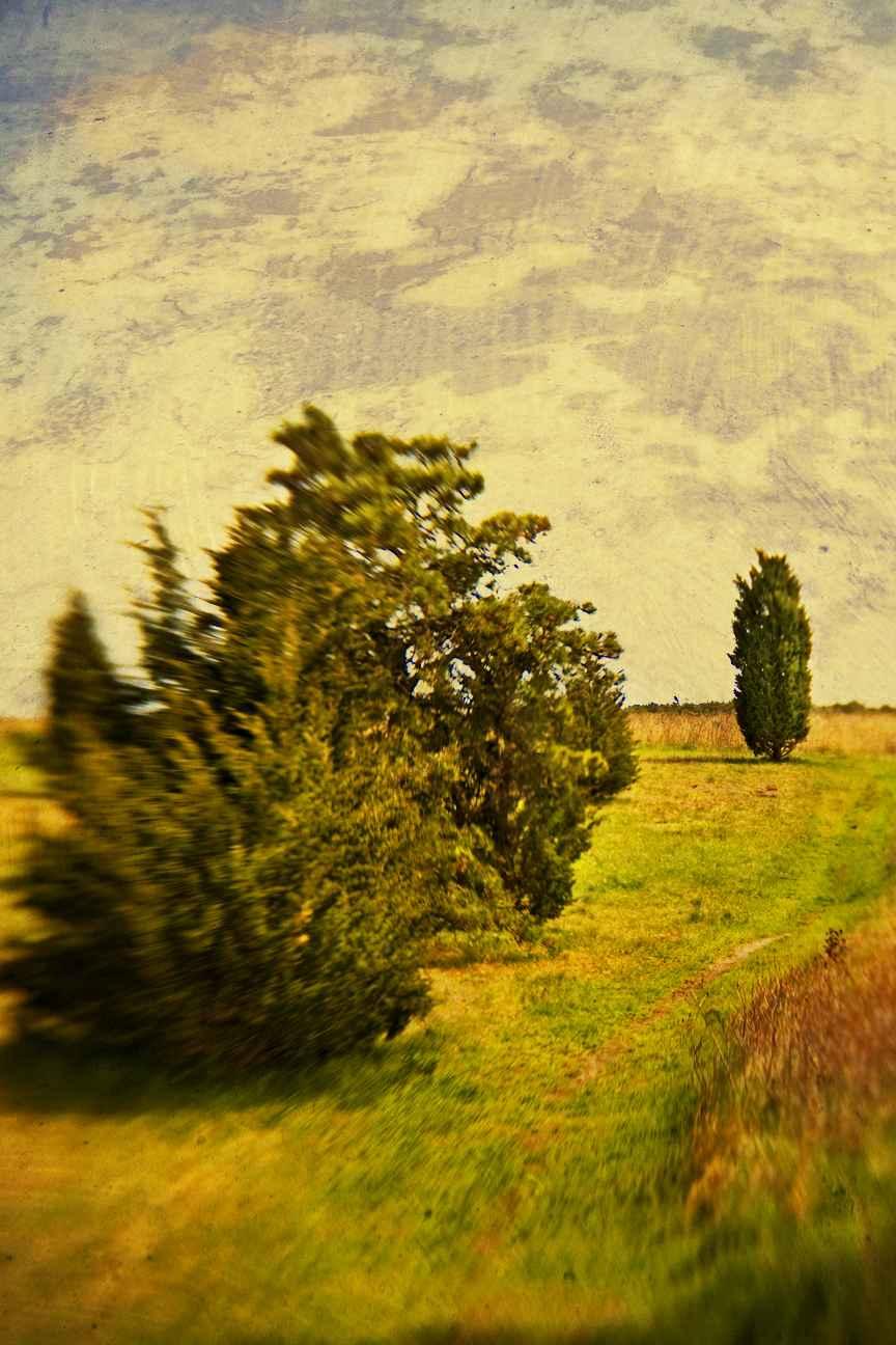 Spring Cedars, 2008 by  Michael Stimola - Masterpiece Online